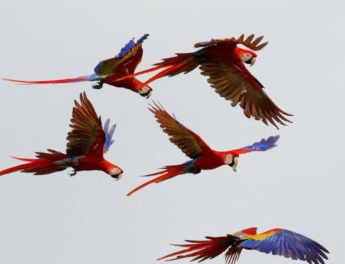 The 7 Most Popular Birds of Costa Rica