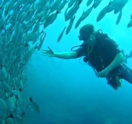 Dive & Digital Detox