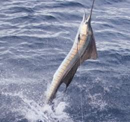 Costa Rica Cross Country Fishing
