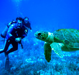 diving-and-snorkeling