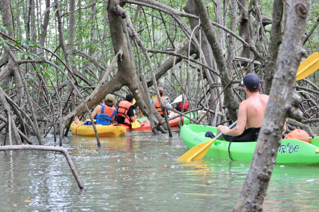 Costa-Rica-Mangrove-Kayaking
