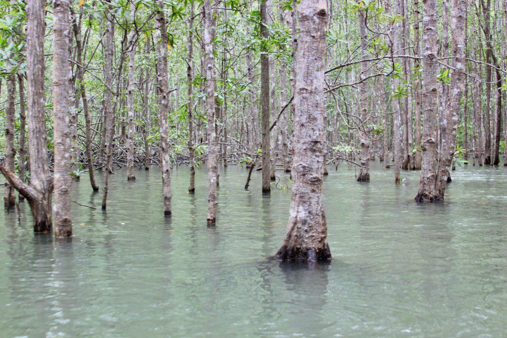 Costa-Rica-Mangrove-Tour